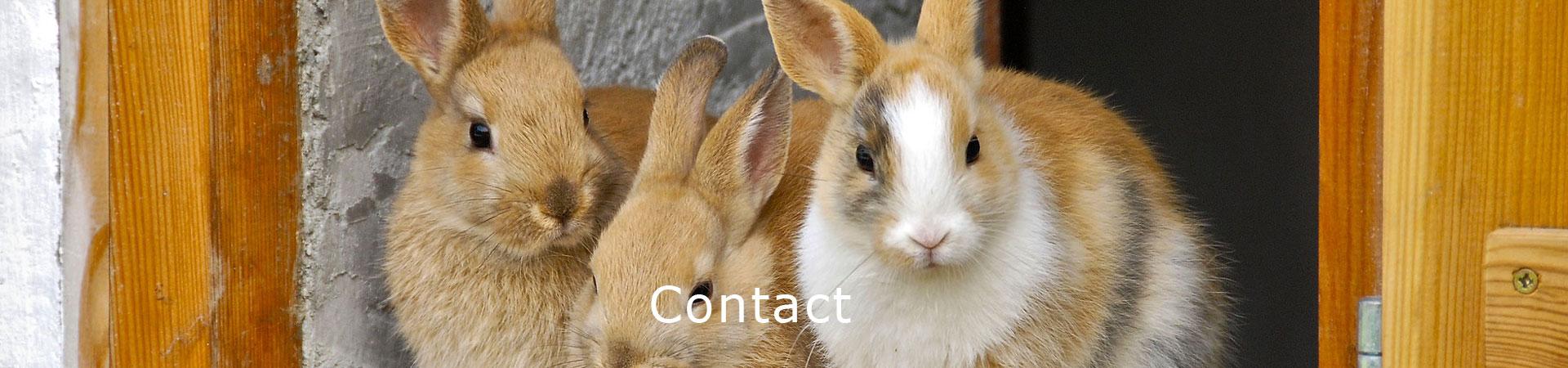 contact dierenkliniek erasmusplein den haag